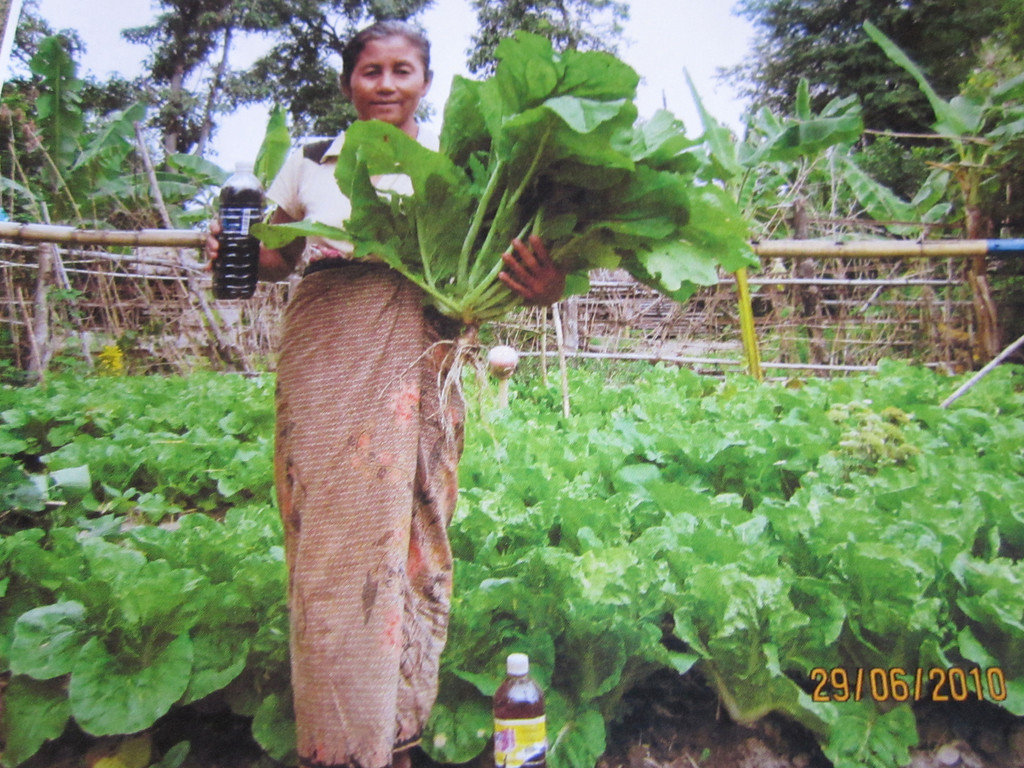 Help Environmental Farming in Myanmar