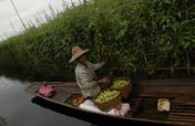 Help Environmental Farming in Myanmar