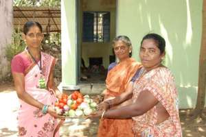 Providing vegetables for noon meal
