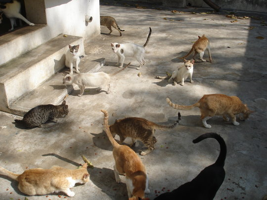 Build a cattery for 300 abandoned cats and kittens