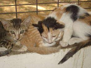 Kittens in the shelter