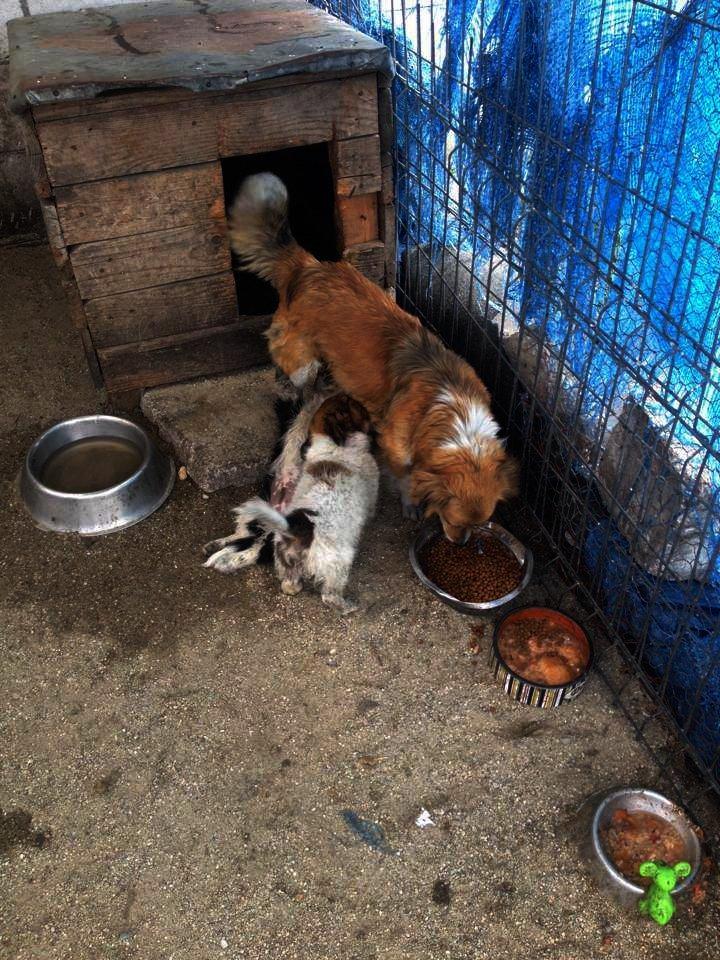 Romanian dog food Jan 2016.jpg