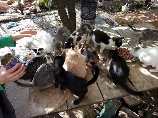 the kitties in Mihaela's foster