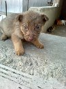 one of the puppies your donation helped