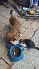 Twix and his kitten friend