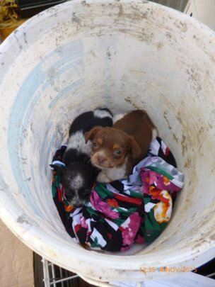puppies dumped in bucket at shelter