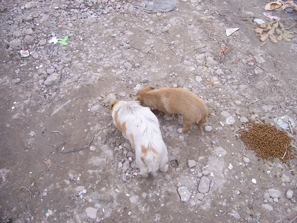 Food for Romanian Animals