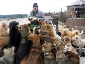 shelter worker feeding dogs