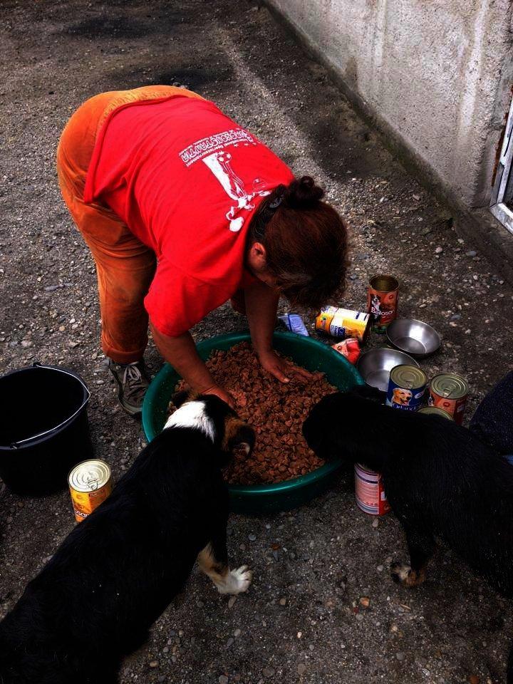 romanian dog food 2016 3.jpg