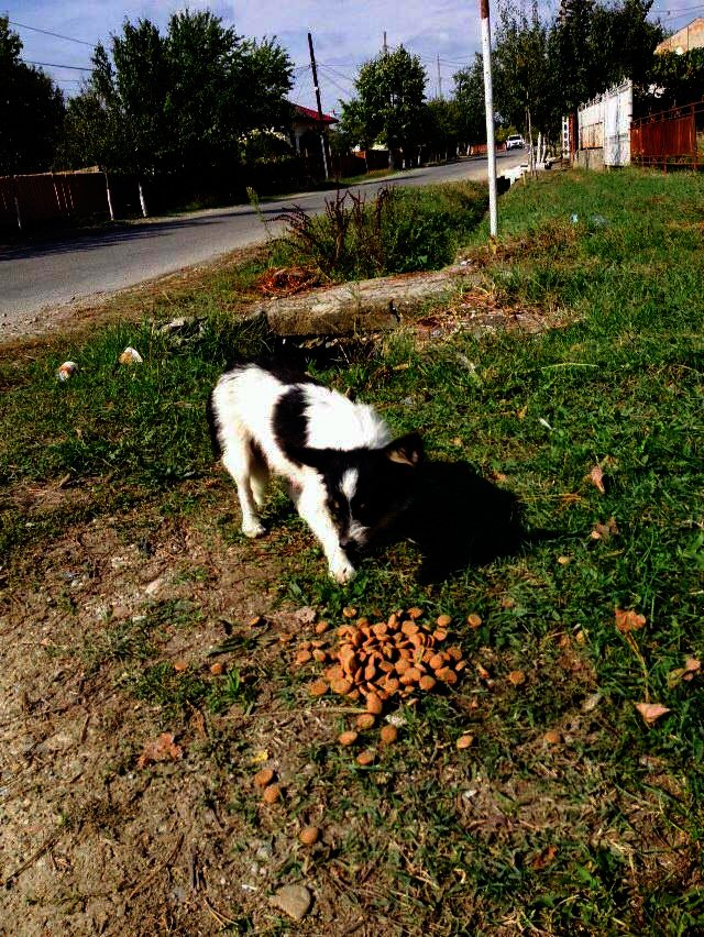 Reports on Food for Romanian Animals - GlobalGiving