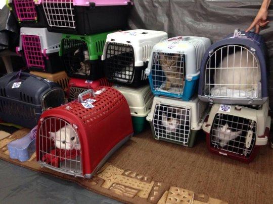 kitties at a spayathon