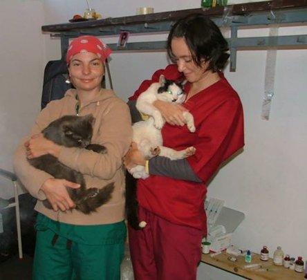 cats at our spayathon in Buhusi