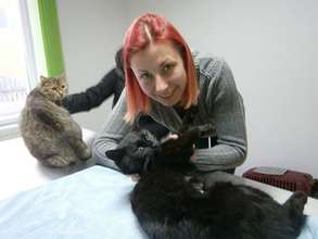 Iasi cat spay January 2015.jpg