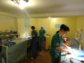 cats being spayed in Craiova clinic