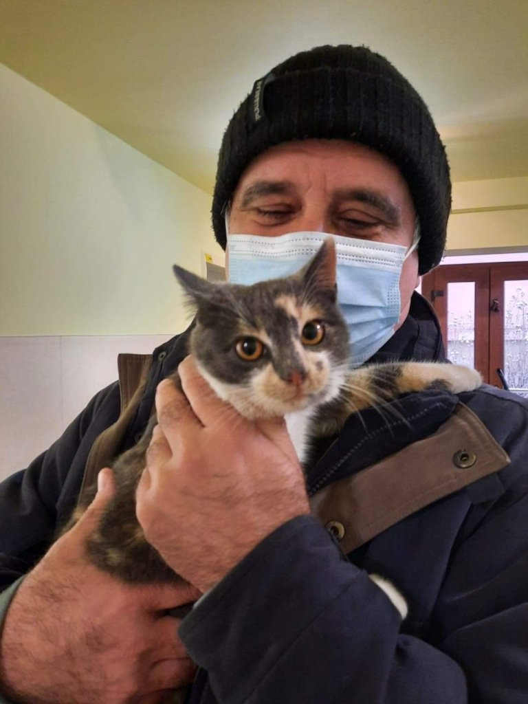 Cat spays in Craiova clinic
