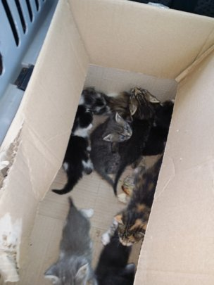 abandoned kittens in Craiova