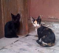 Craiova kitties spayed