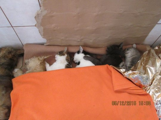 cat spay neuter in December, Ramnicu Sarat