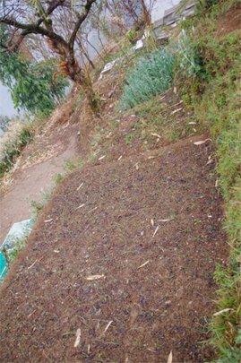 School garden (crops had been recently harvested!)