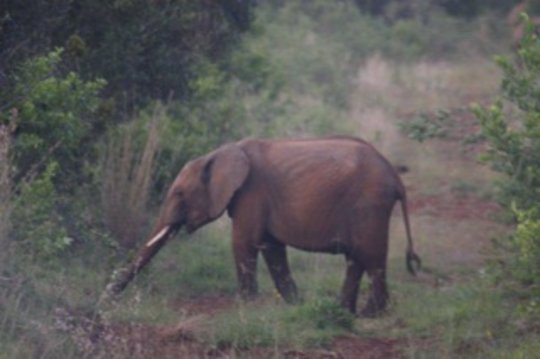 Save Kenyan Elephants with 300km of Firebreaks