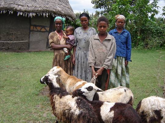 Asset Building Group with livestock