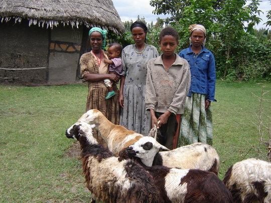 Women with Livestock
