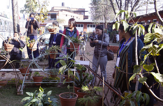 Observing Herbal Garden in School