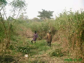 Photo 2-- clearing land