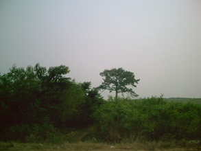 Photo 3-- clearing land