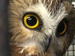Provide New Larger Habitats for Education Owls