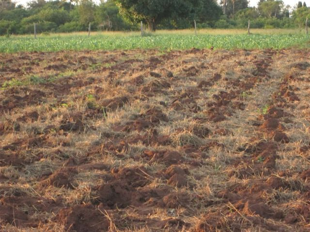 Land ready to plant, with mulch