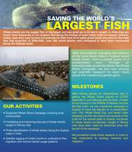 Saving the World's Largest Fish