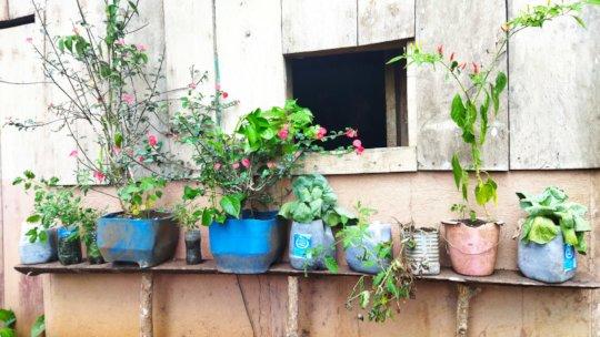 Yessenia's plants.