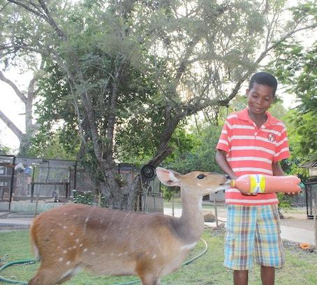Child feeding Maxi 2
