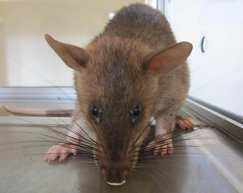Hamisi learning to detect TB