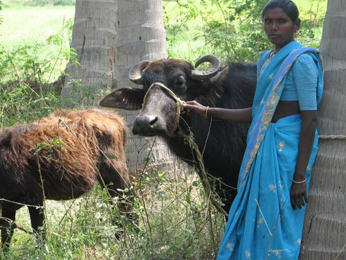 Her mother with Milch Animal
