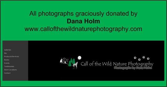 Dana Holm - Photographer