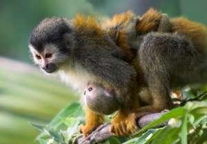 Help ASANA Conserve Costa Rica's Pacific Coast