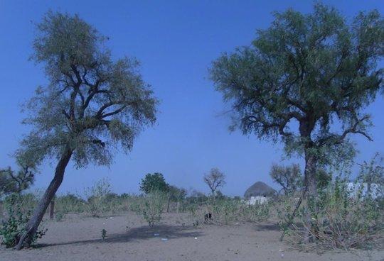 Rural district of Setrawa