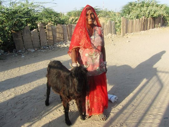 Sheerni SHG member with her goat