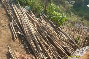 Got the Bamboo