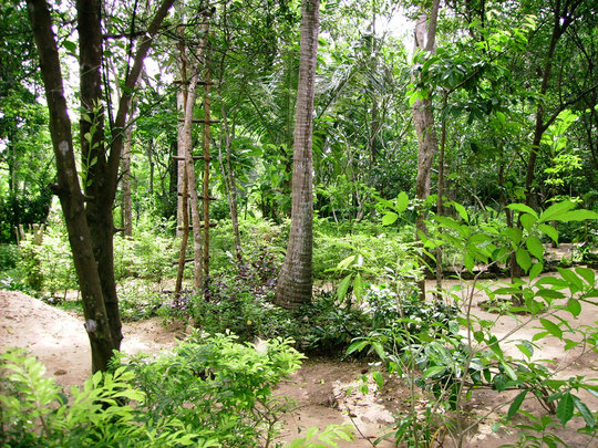 Lush Sri Lankan Vegetation