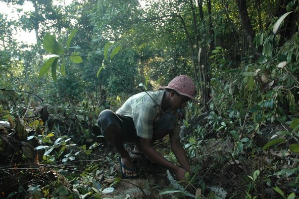 Protect Last Viable Sri Lanka Rainforest With Jobs