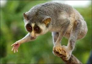 Treasure trove of endemic wildlife