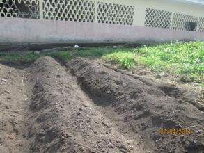 School garden ready fro planting