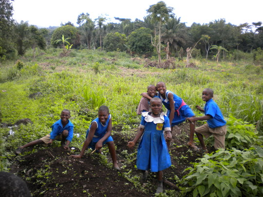 Vegetable Gardens for Improved Nutrition in Buea