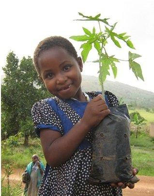 Child with papaya tree