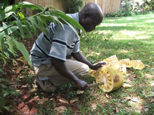 Fred cutting jackfruit