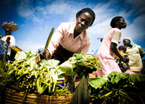 Women farmers produce 70 percent of Africa's food.