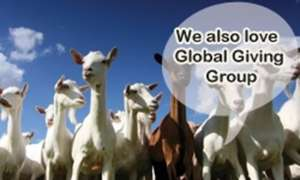 Goats love global giving